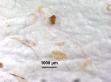 miroplastics-Lusher et al.