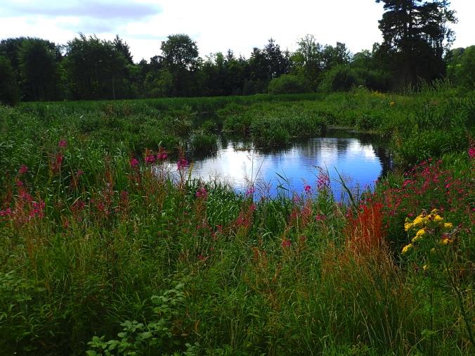 Pond Monaghan